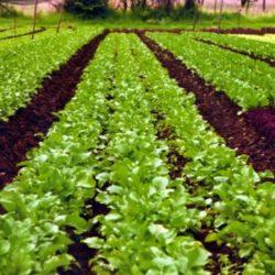 Органічне землеробство: результати та перспективи